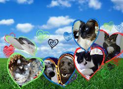 Animais meus Amores