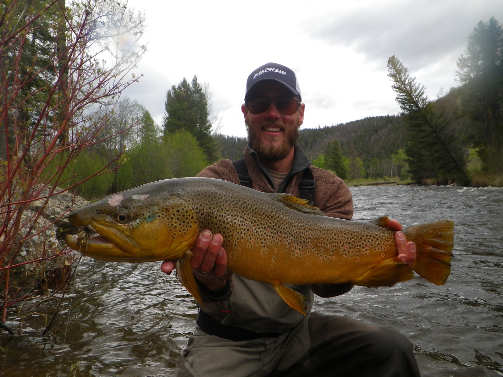 Notes from the net rock creek no big ones eh for Rock creek montana fishing report