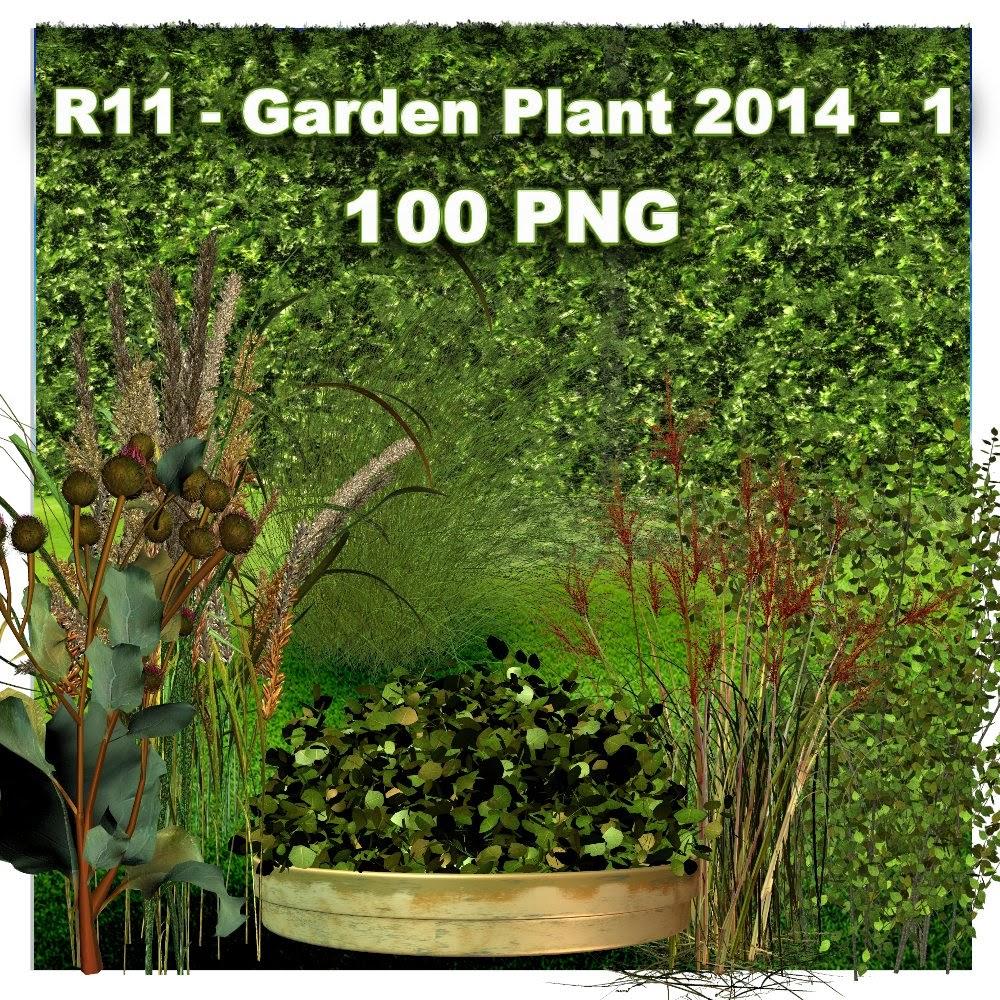 http://1.bp.blogspot.com/-qJ7pYlE-z2c/U5tJaZNqhwI/AAAAAAAADX8/C1ApA9H_27s/s1600/R11+-+Garden+Plant+2014+-+1.jpg