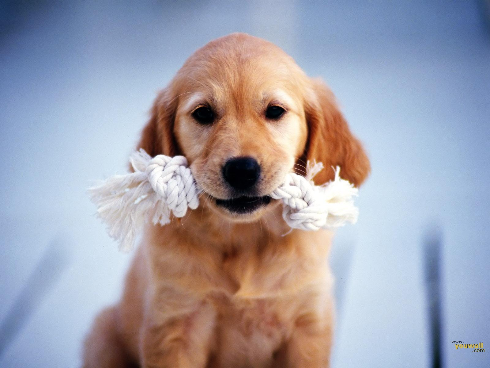 puppy dog wallpaper - photo #24