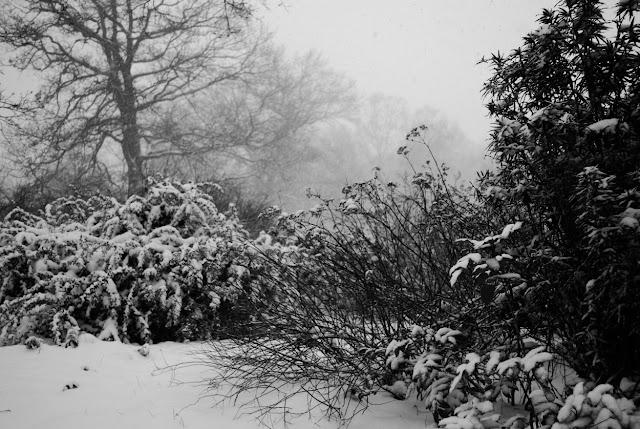 Winter in Leipzig
