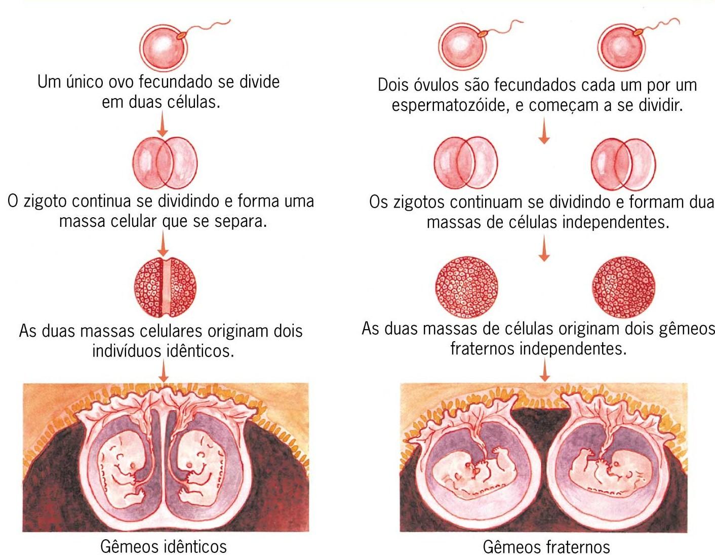 Genes e hereditariedade