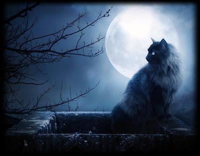 Acura  Gatos on Tallando L  Piz  Baudelaire  Acerca De Los Gatos