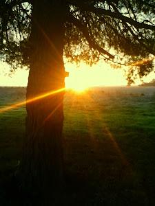 Medeiros Tree, SLR state park