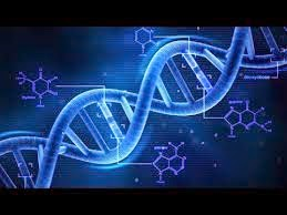 Cours  Génétique svi s4