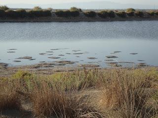 Del Alfacs Bay