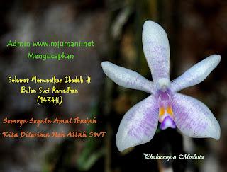 hari pertama puasa pertama ramadhan 2013 NU