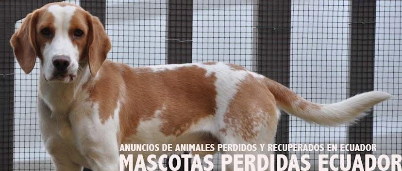 Mascotas Perdidas Ecuador