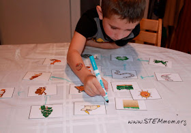 Boy Drawing Food Web using free printable Food Chain Activity Cards from STEMmom.org