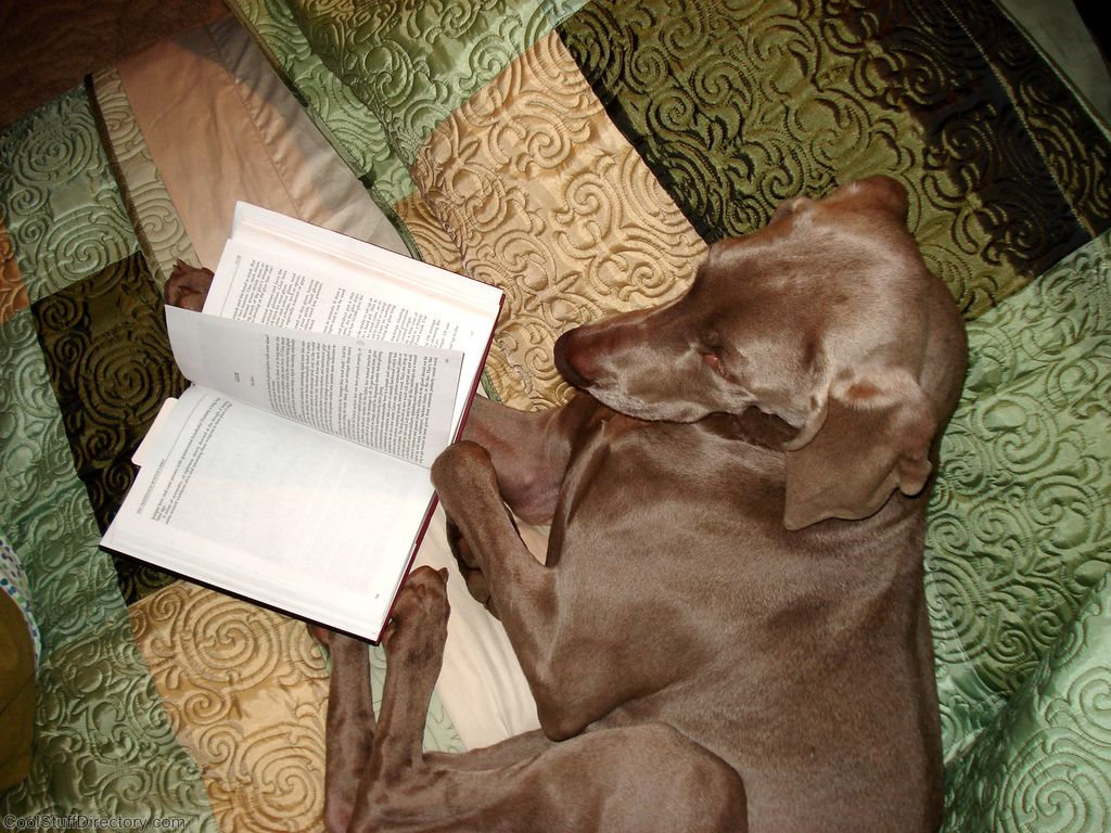 31. Dog is Reading by kia's r kid