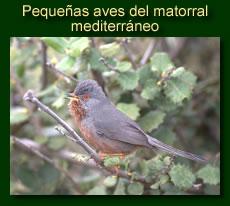 http://iberian-nature.blogspot.com.es/p/ruta-tematica-pequenas-aves-del.html
