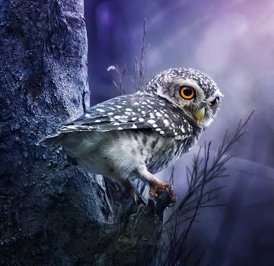 Un hermoso búho - A cute owl