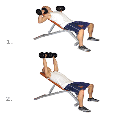 Chest Exercises   step 4   incline dumbbell pressIncline Dumbbell Press
