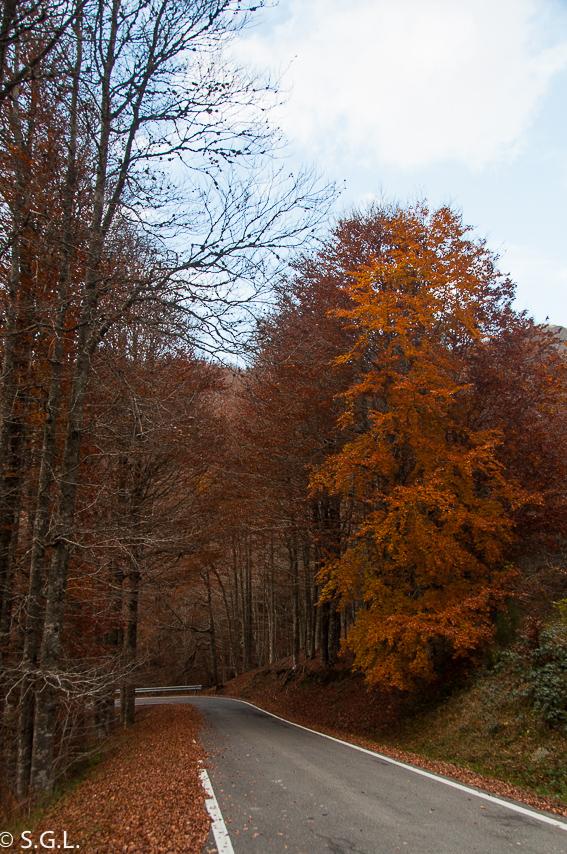 La selva de Irati. Navarra