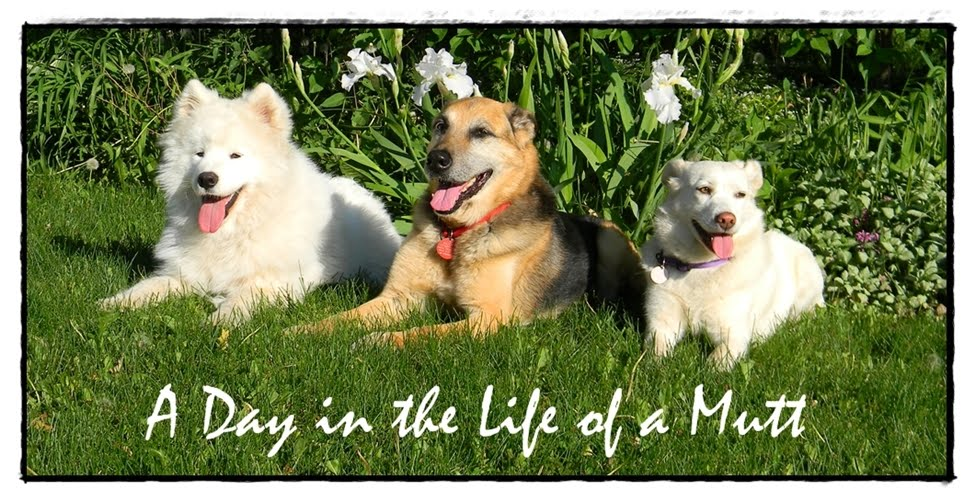 A Day in the Life of a Mutt