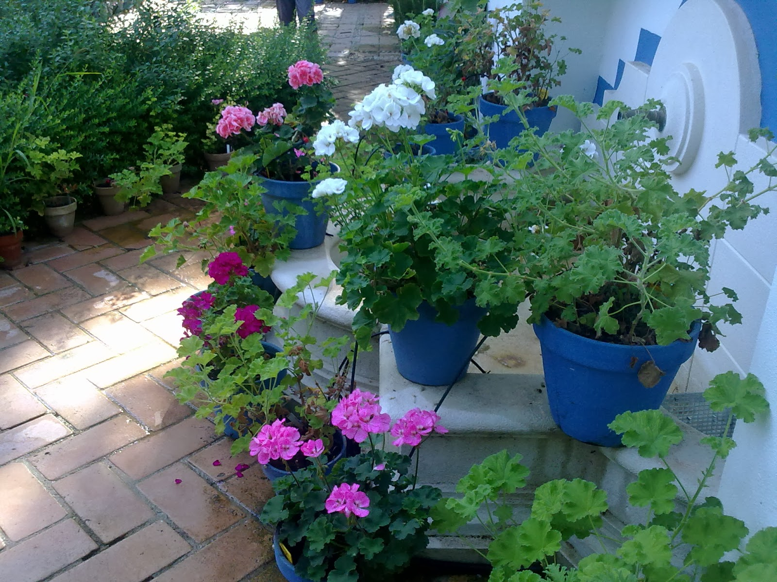 Patios decorados con plantas great como decorar el patio for Como decorar el patio de la casa