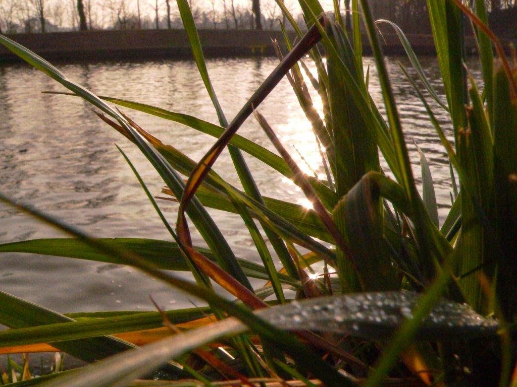 Frühling Wasser Gras Spiegelung Sonne Tropfen