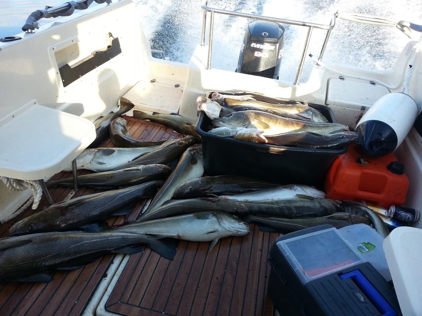 trækker torsk i land massage og EcoRI