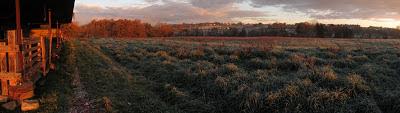 herbe givrée