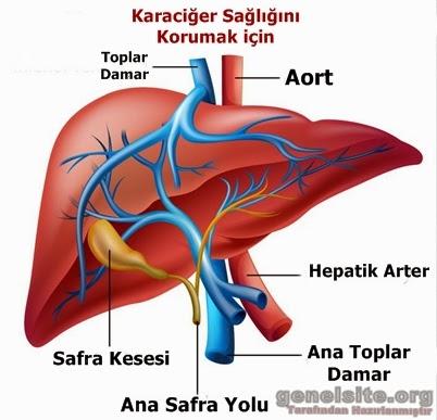 Karaciğer sağlığını koruma