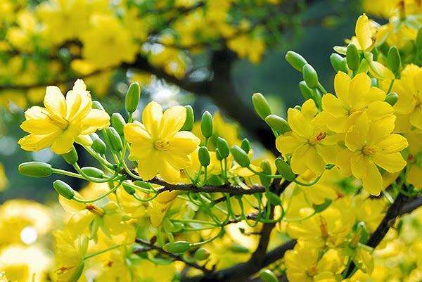Xuân đang đến rất gần rồi, Thugian180 xin cập nhật thêm một số hình ảnh hoa mai hoa đào đẹp nhất cho không khí tết thêm nô nức nhé!
