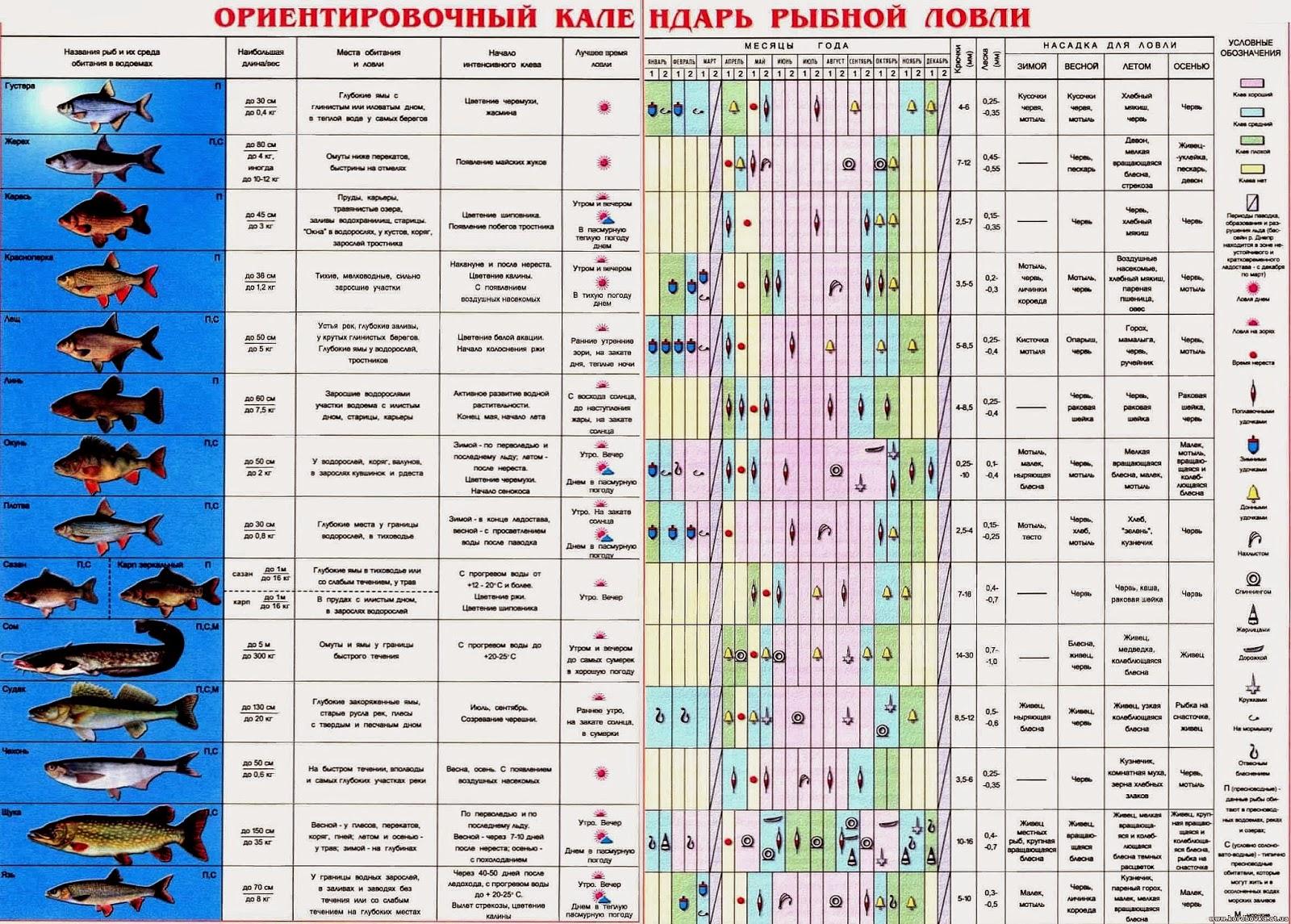 календарь клева в новомосковске