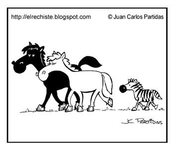 caballos blanco y negro