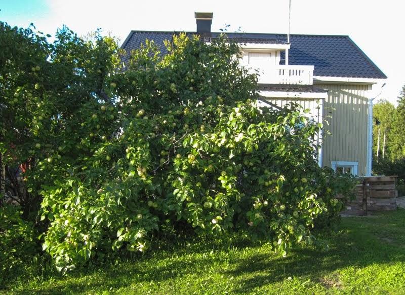 Omenamäki syyskesällä 2013