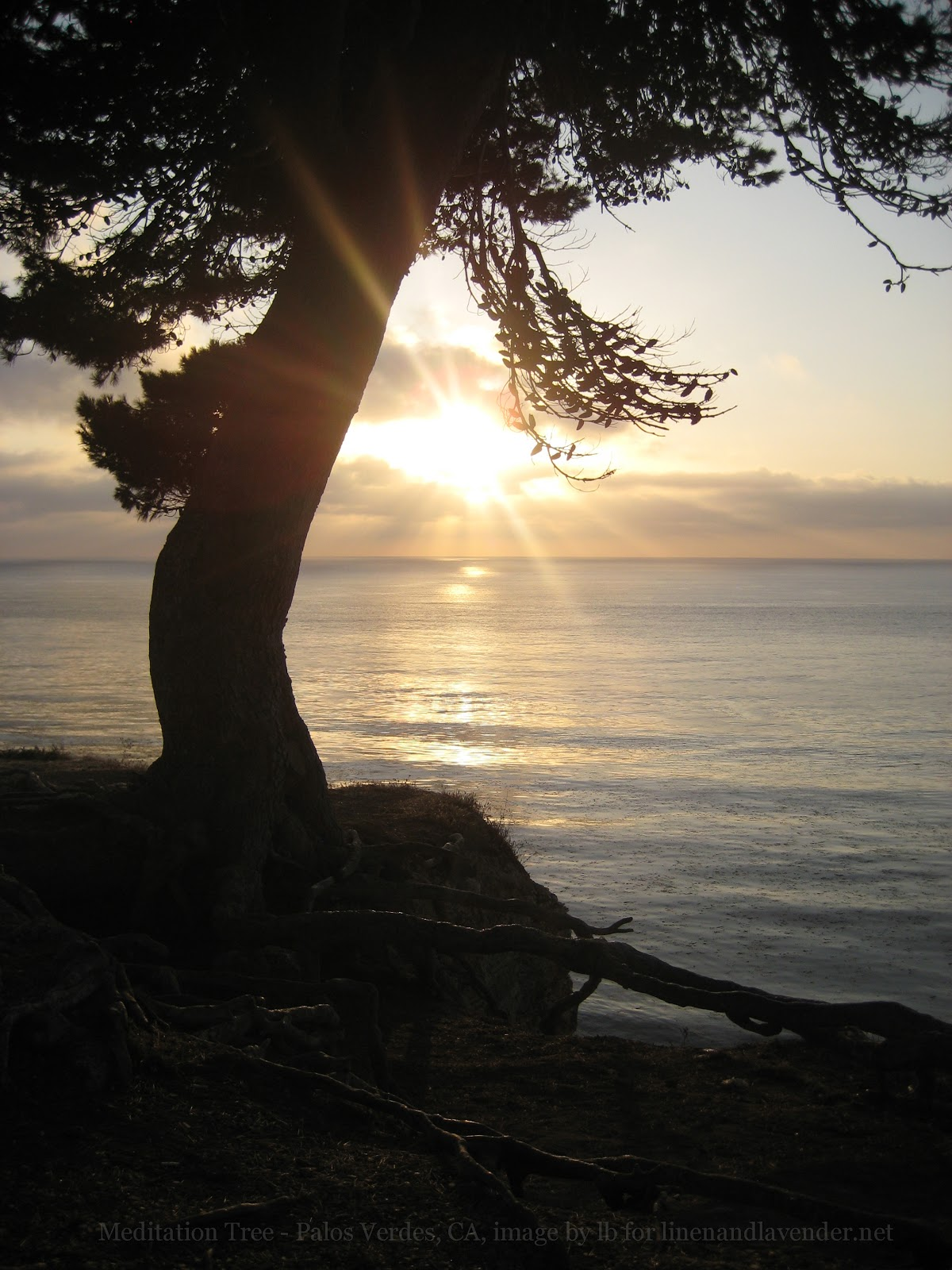 Meditation Tree - Palos Verdes, California - image by lb for linenandlavender.net - http://www.linenandlavender.net/p/inspired-quotes-and-images.html