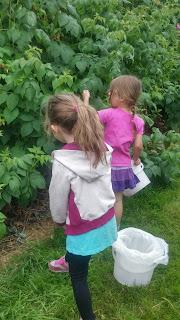 fruit picking adventures
