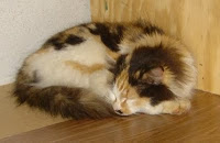 Calico Cat making herself at home