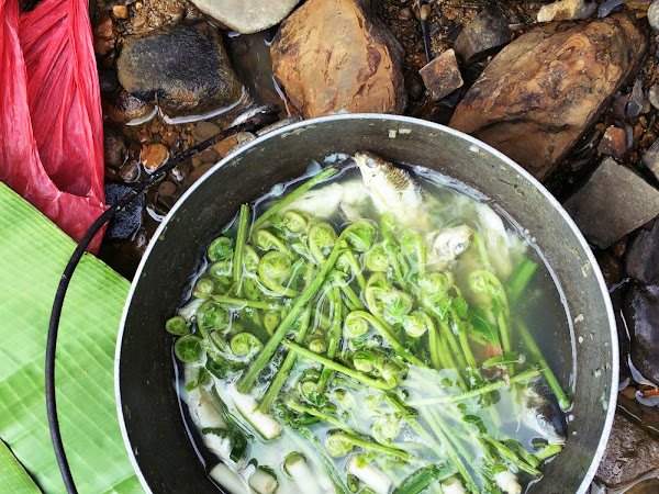 Data Kakus,Sarawak :The taste of Kenyah foods