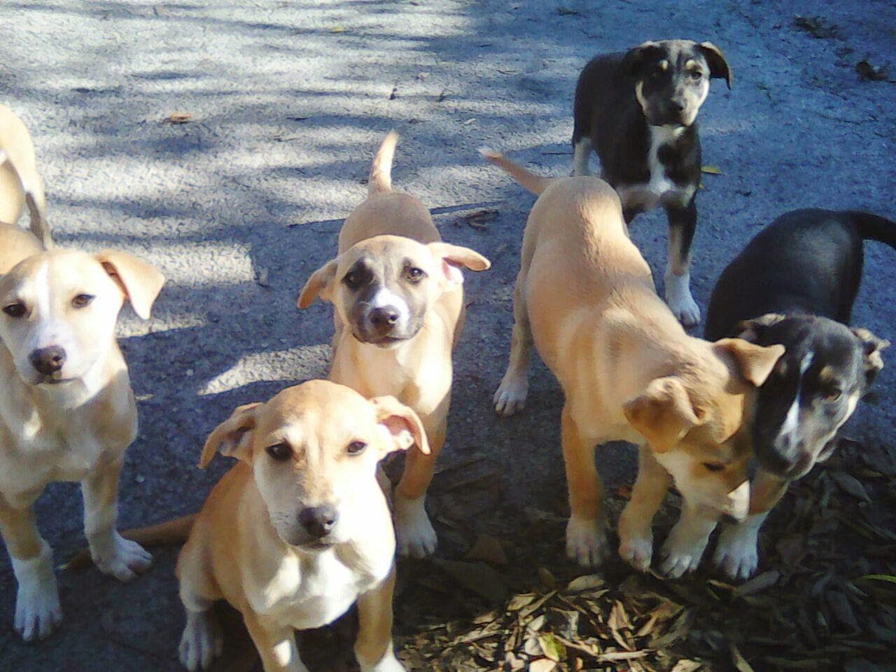 randagi cani Sicilia adozioni amore