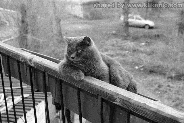 http://1.bp.blogspot.com/-qNLOOTMxBus/TXlonW44OnI/AAAAAAAAQzg/y0X4zsyHVGA/s1600/these_funny_animals_635_640_10.jpg