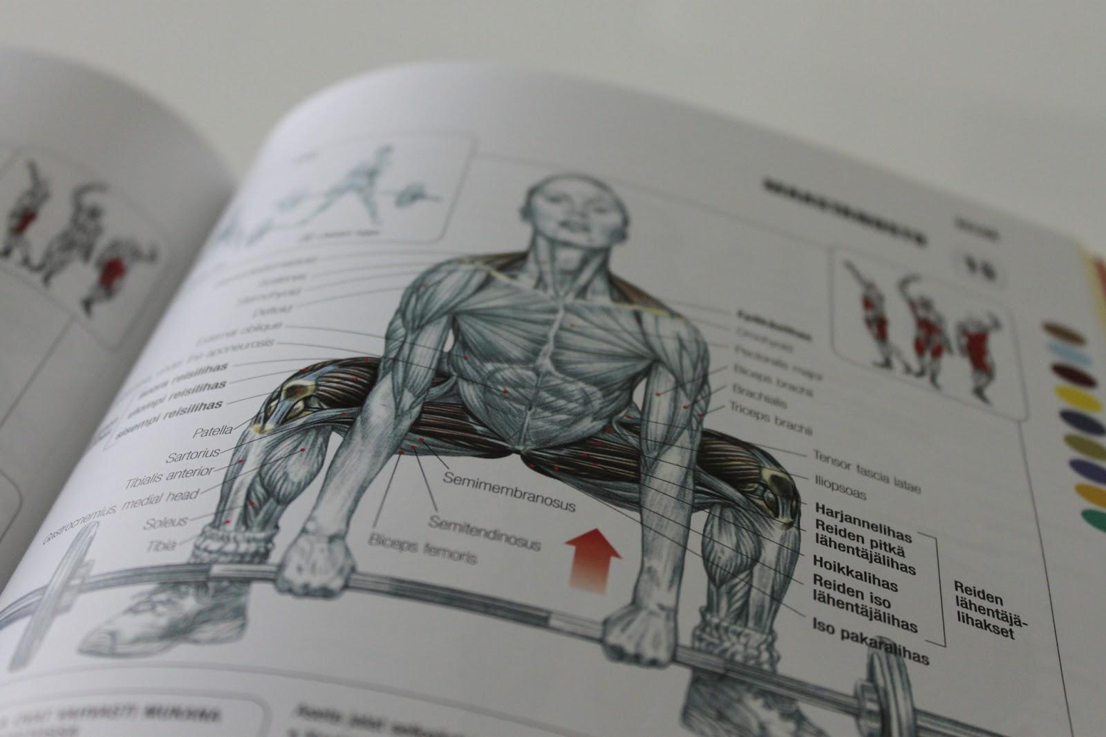 lihaskuntoharjoittelu ja venyttely Karkkila