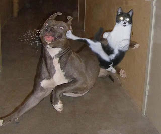 gato karateca