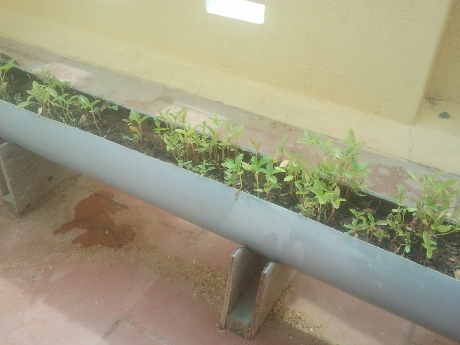 Http://ddeepakraja.blogspot.in/2013/05/diy Terrace Garden From Pvc Pipe.html