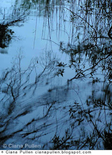 Photograph of black silhouetted reeds reflected in blue rippling water