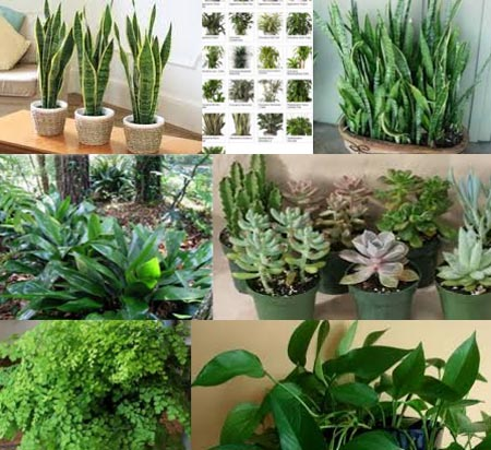 Low light plants - 9 Low Light Plants That You Can Grow At Home - Bugrant - Low Light Outdoor Plants Home Hold Design Reference