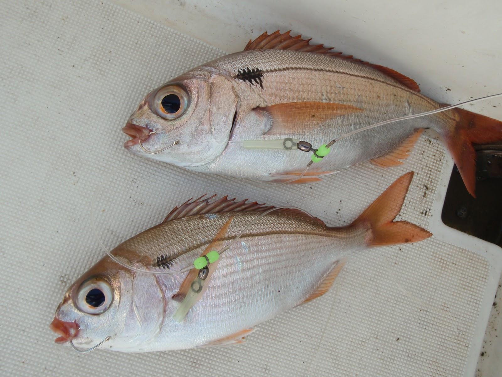 Lavandou sport fishing beaux yeux par 210m for Poisson yeux miroir