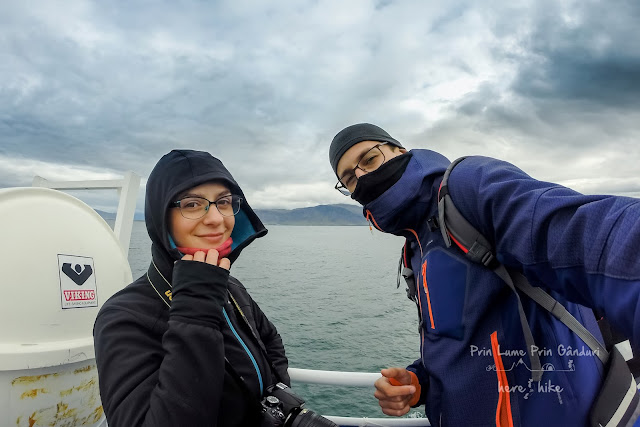 honeymoon-iceland-whale-watching-tour