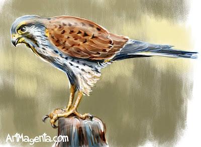 Tornfalken är en fågelmålning av ArtMagenta.