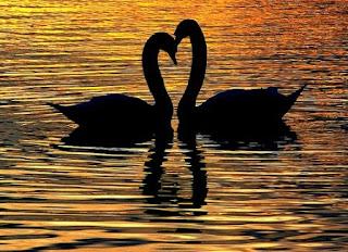 Poema romántico Tú me haces sentir amada, Frases para mi novio, novia. frases de amor. mensajes cortos de amor en la distancia.