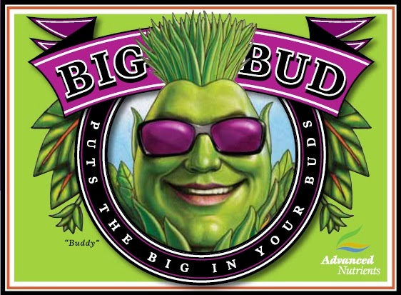Como usar nutrientes para el cultivo de las plantas de marihuana - 07-03-2014