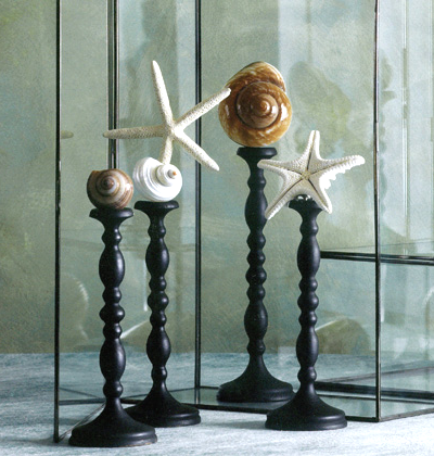 display stands for shells and sea life