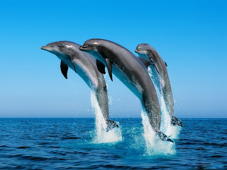 dolphins in the air (24)
