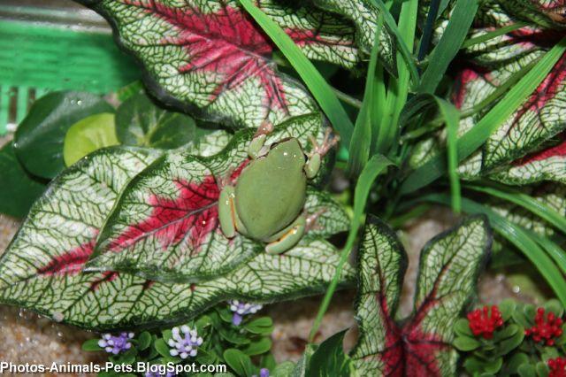 http://1.bp.blogspot.com/-qPDFcY4NTno/TaBL2-wj2vI/AAAAAAAAAmc/BA5jxrxQmSc/s1600/green%2Bfrog_0001.jpg