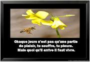 Citation vivre la vie en image · Tweet. Liens sponsorisés