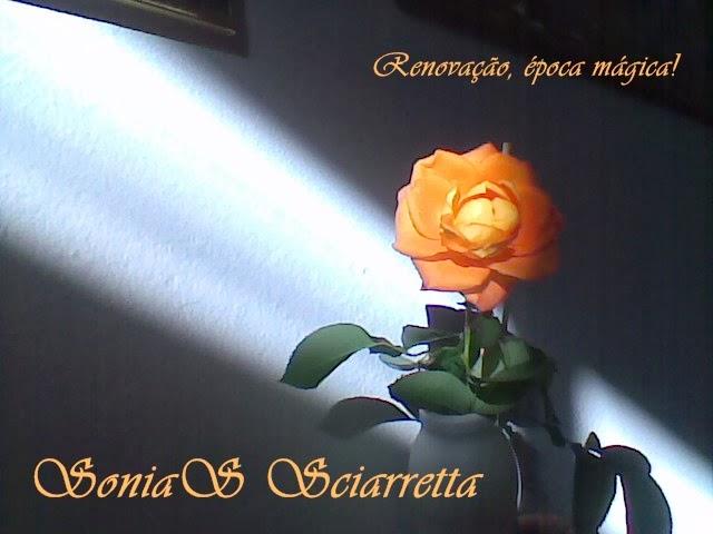 SONIAS SCIARRETTA