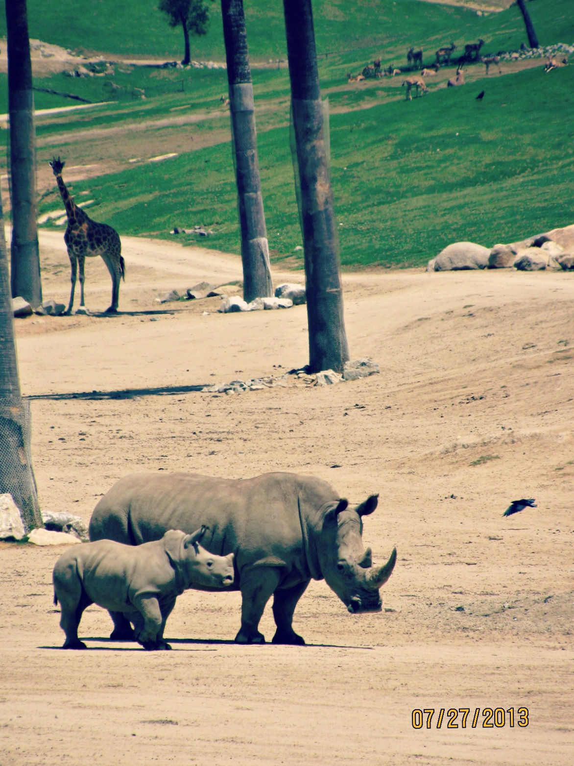 San Diego Safari Park // Rhino Mom and Baby